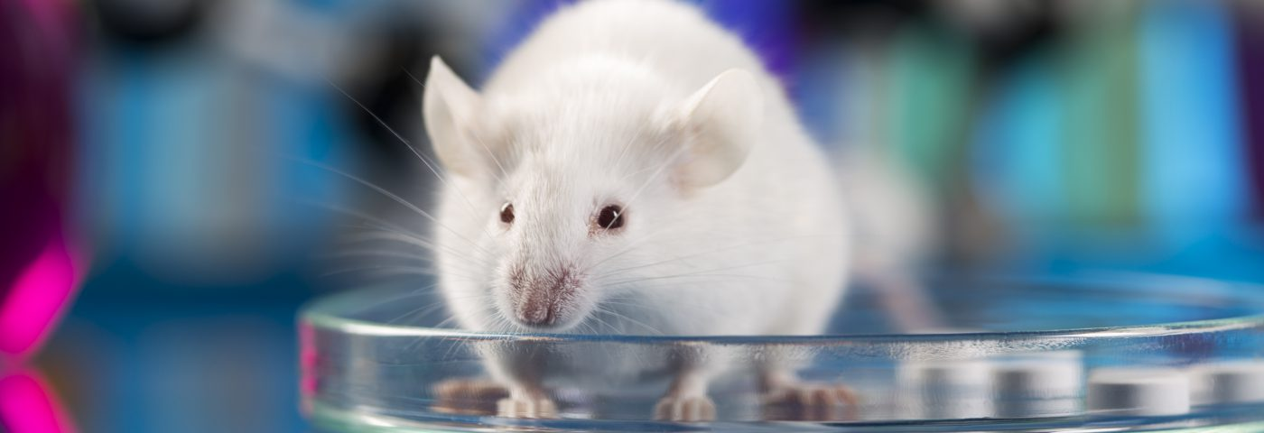 A step in the right direction for the animal testing ban