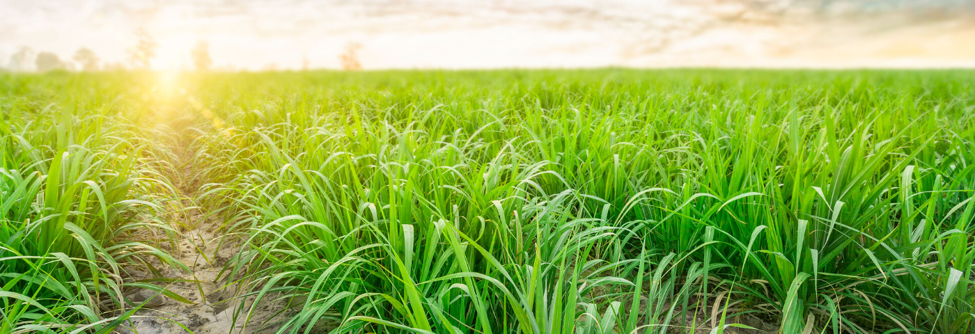 Latest ingredient round-up: from CSAR updates to silica substitutes