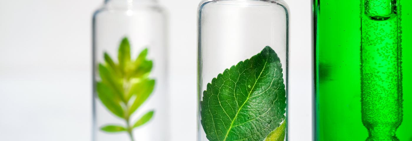 Novos ingredientes naturais e que dispensam embalagens são destaques no primeiro dia de in-cosmetics Virtual
