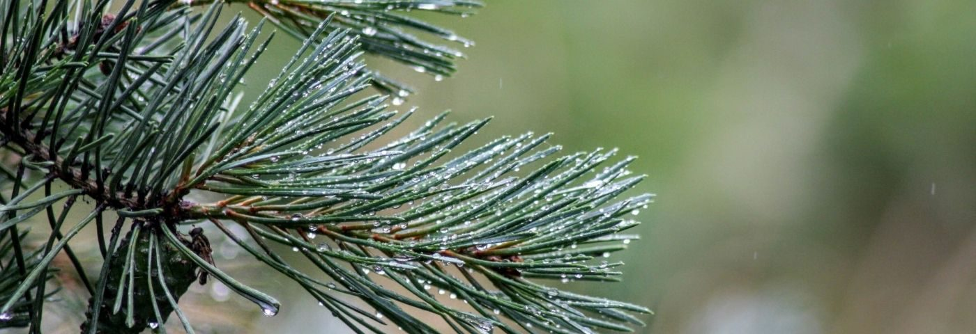 Latest ingredients round-up: from microalgae oil to an active ingredient upcycled from white pine