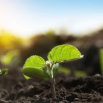 Latest ingredients round-up: From partnerships to plant root actives