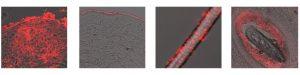 Nanovex biotechnology