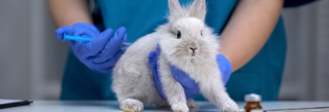 Europe takes action against animal testing