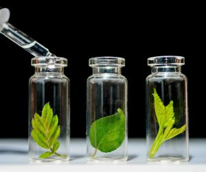 Leaves in glass jars