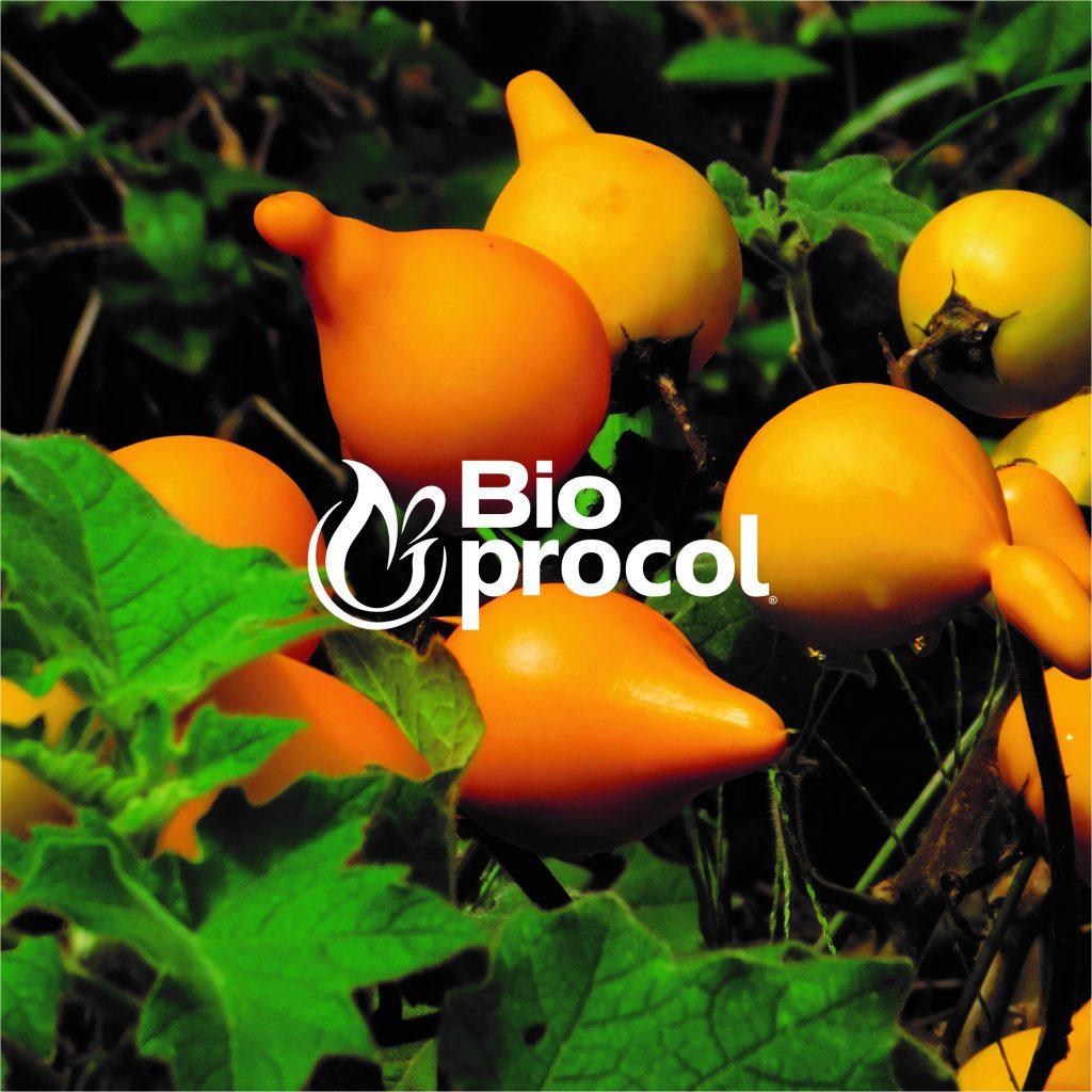 bioprocol blog image 1