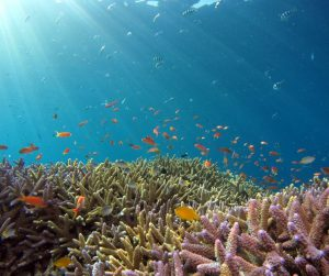 blue ocean and colourful coral reef